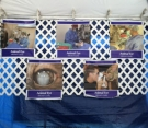 A display of photos from our Paws in the Park event.