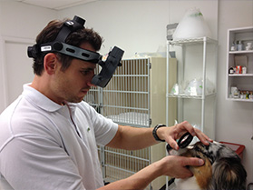 One of our Opthamologists performing an indirect ophthalmoscopy on a pet dog.